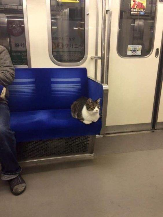 chat métro.jpg